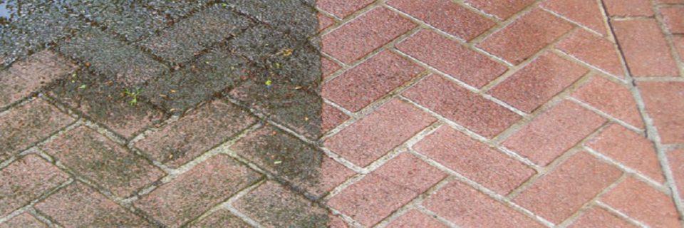 Micro-organismes parasites incrustés  redonner de l'éclat à votre terrasse.